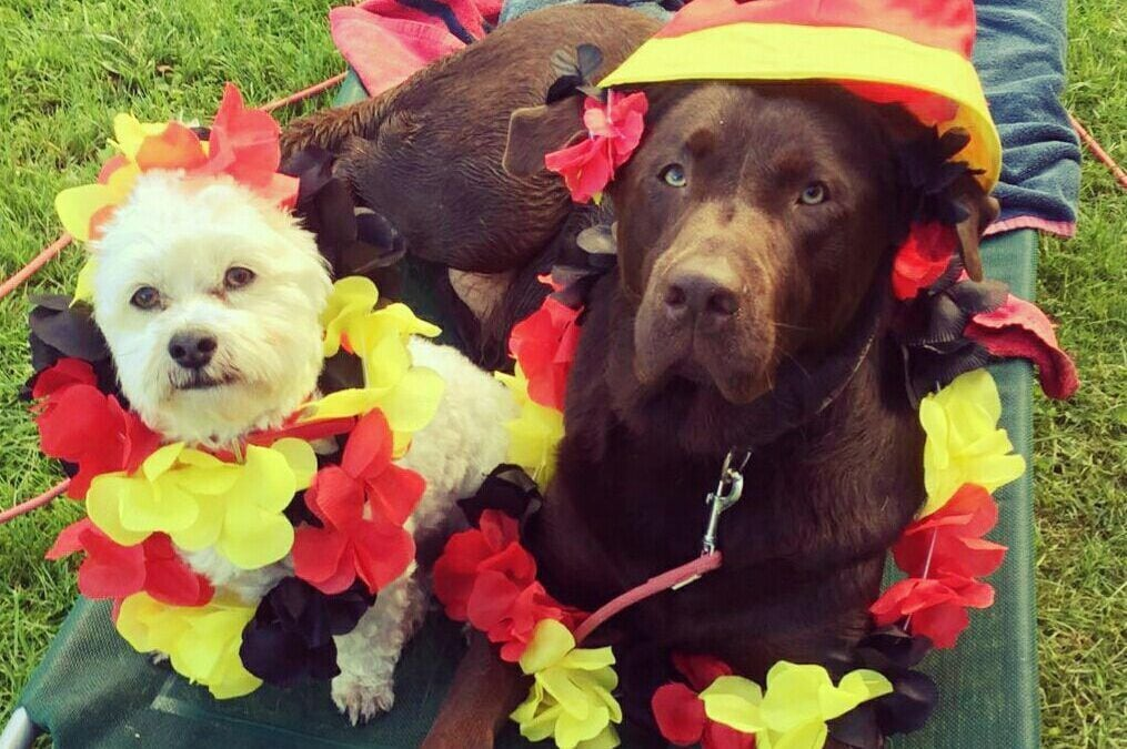 Hunde Foto: Anja und Capper und Theo – Ein Hoch auf uns
