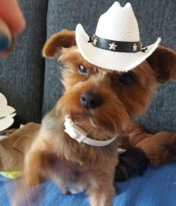 Hunde Foto: Martina und Diego – Wanna be a Cowboy