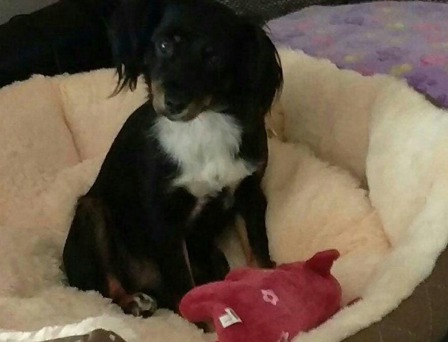 Hunde Foto: Sabrina und Twitty – Mein kleiner Quatschkopf