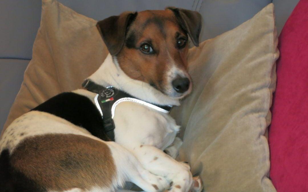 Hunde Foto: Eveline und Scooby – mein Goldschatz