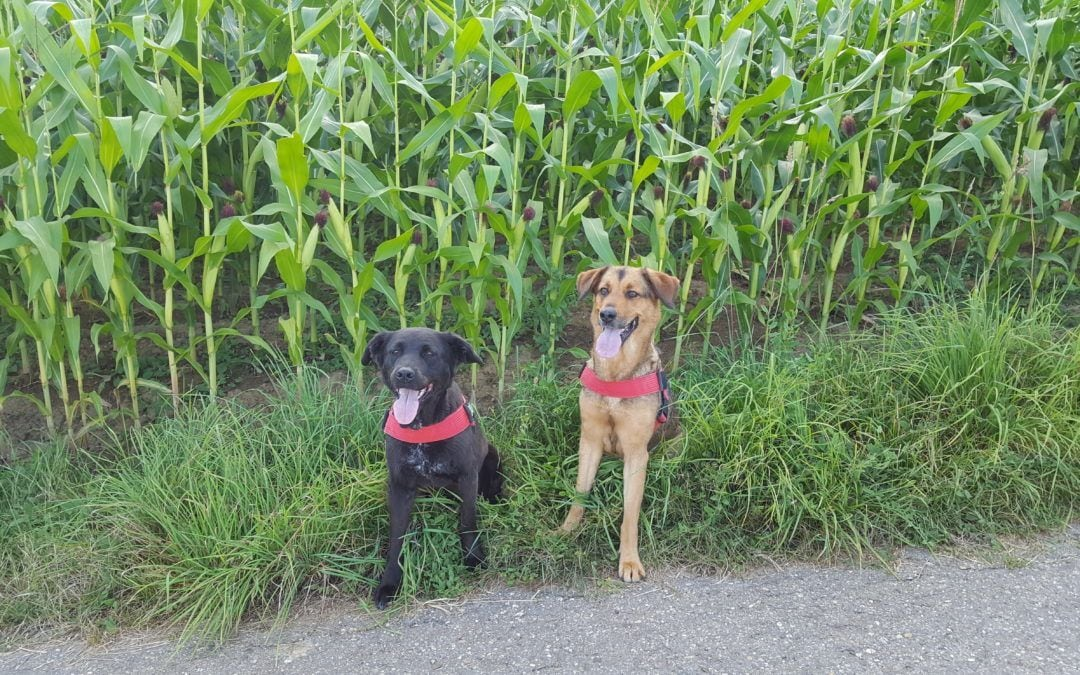 Hunde Foto: Natascha und Kelly & Alia – Wir genießen den schönen Tag