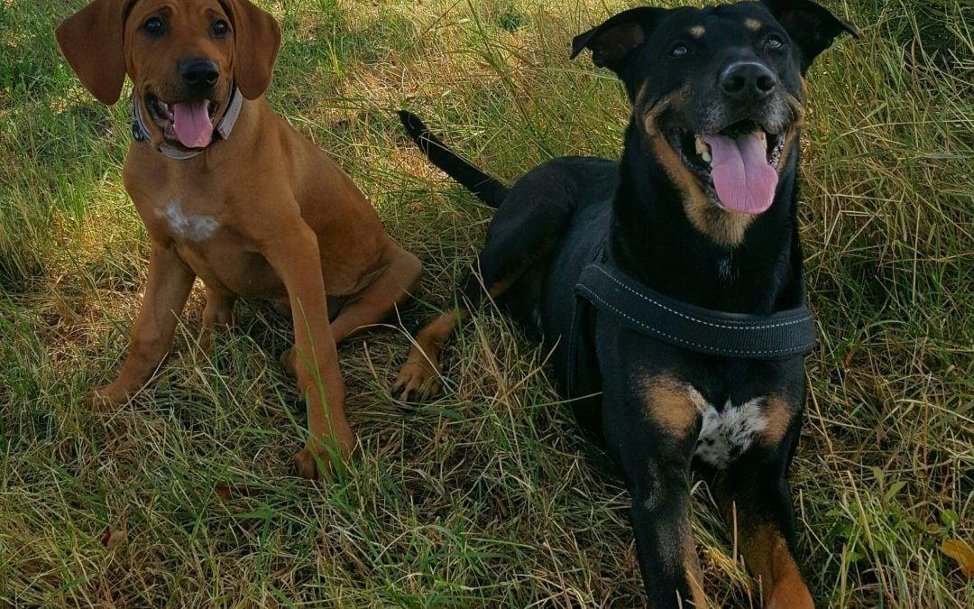 Hunde Foto: Jasmin und Apollo und Elli – Wir gehören zusammen…