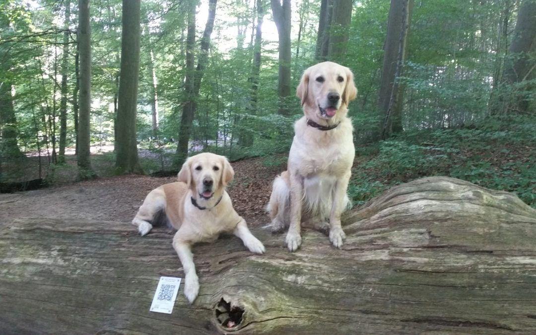 Hunde Foto: Steffi und Amy und Finja – Meine beiden Herzhunde !!! ?