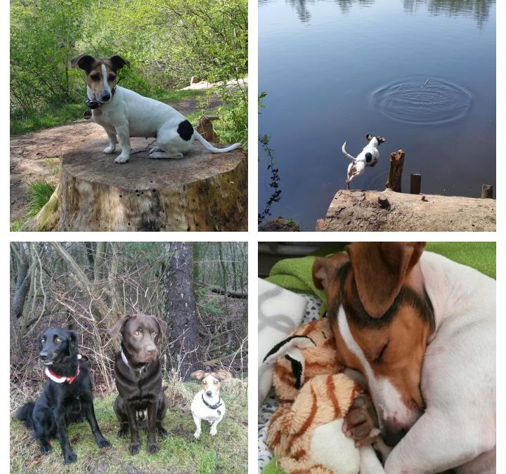 Hunde Foto: Sibylle und JULE – Du bist die BESTE ❤