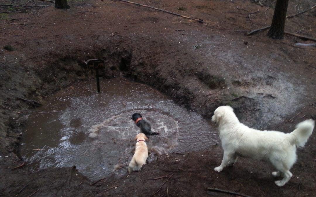 Hunde Foto: Sandra und Bonnie – eine runde baden mit meinen Freunden