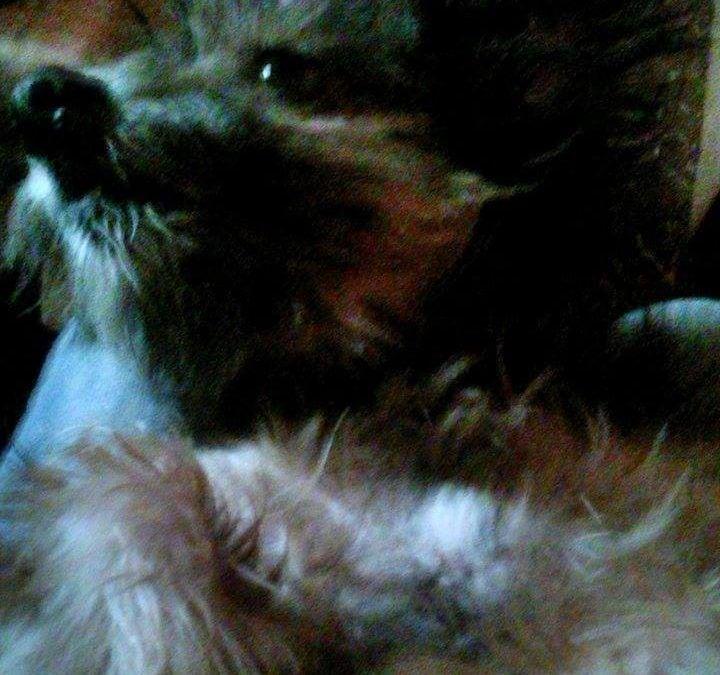 Hunde Foto: Kathrin und Zicke – kraul mir den bauch