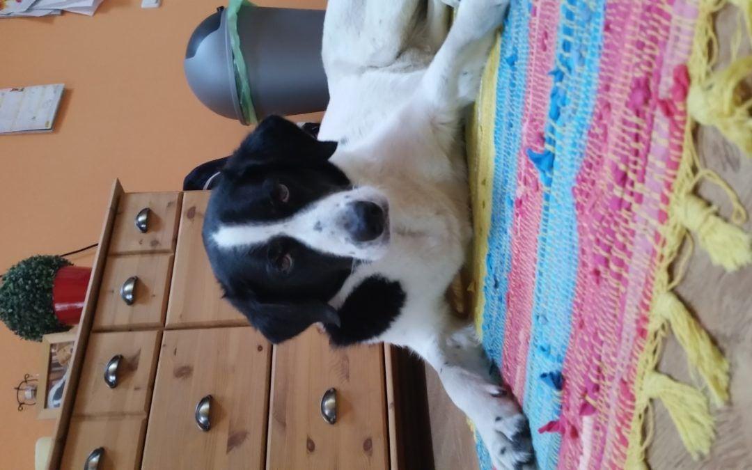 Hunde Foto: Ralf und AFRA – Beste Freundin