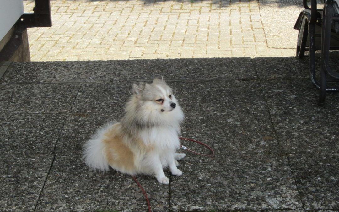 Hunde Foto: Tanja und Finn – Liebling