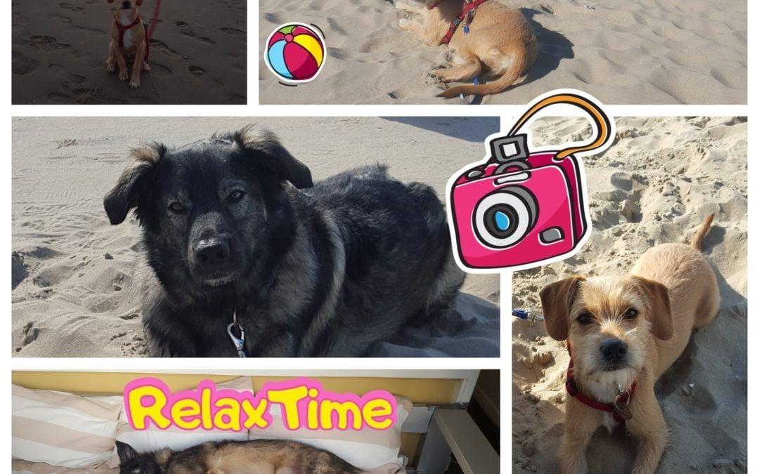 Hunde Foto: Anna und Balou (rumänischer Schäferhund) und Tosca (Terrier Mischling) – Ein traumhafter Urlaub am Meer! ?