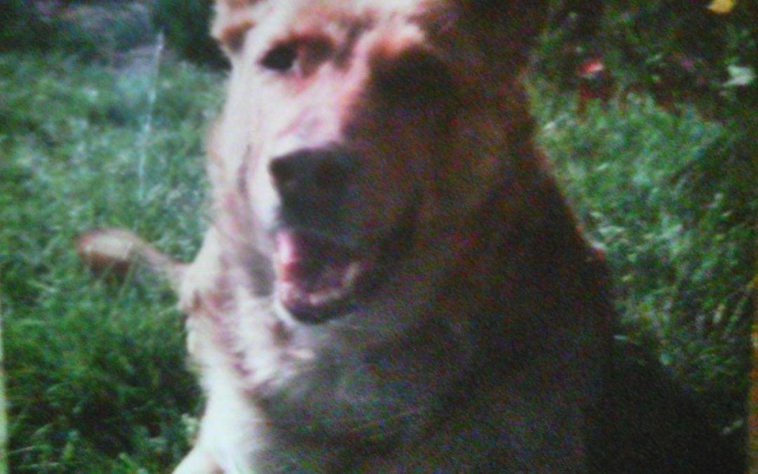 Hunde Foto: Kathrin und Anka – mein erster hund