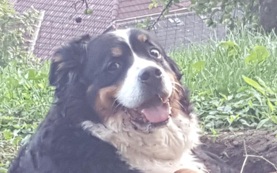 Hunde Foto: Barbara und Maggie – Ich grab die tiefsten Löcher