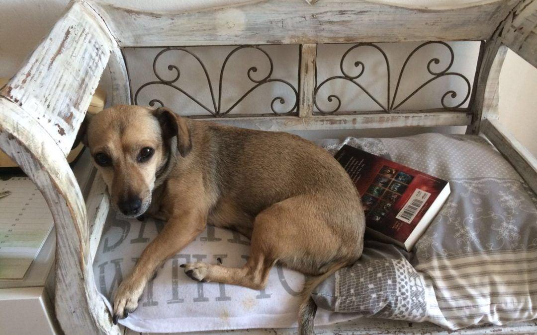 Hunde Foto: Gerlinde und Lucy – Schöner Wohnen