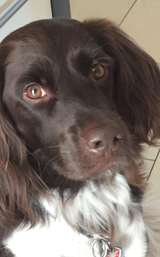 Hunde Foto: Veronique und Clyde – Das muss Liebe sein…❤️❤️