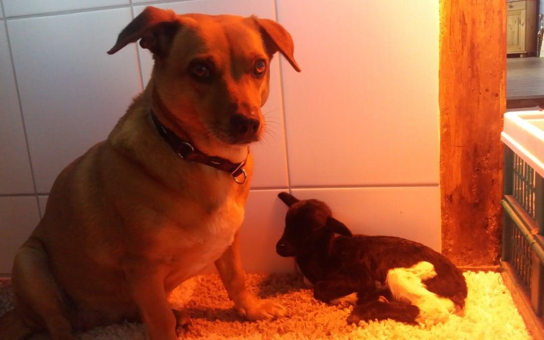 Hunde Foto: Nina und Bijou – Babysitter