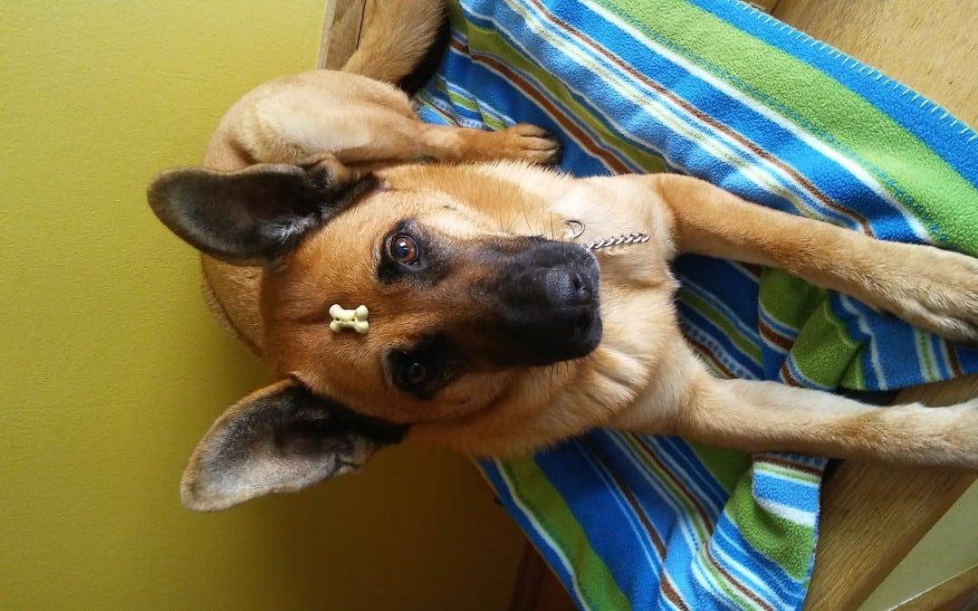 Hunde Foto: Michaela und Kimba – Ommm
