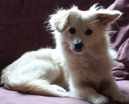 Hunde Foto: Gaby und Benny – Ick bin dabei ?extrem coutching..?