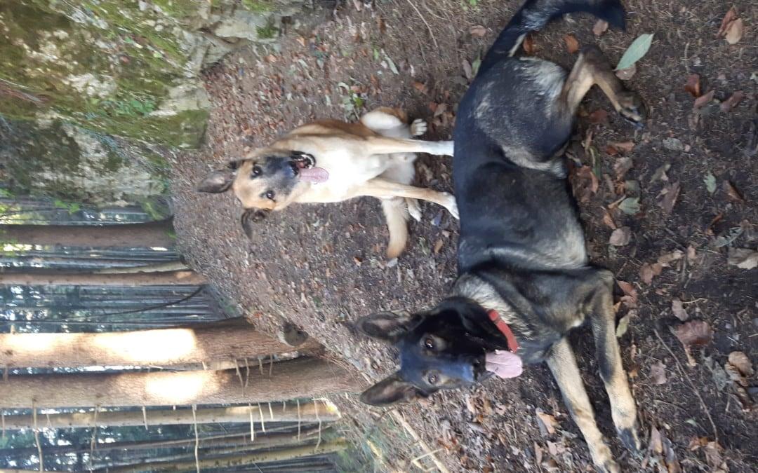 Hunde Foto: Tanja und Flash & Shakira – Herbst