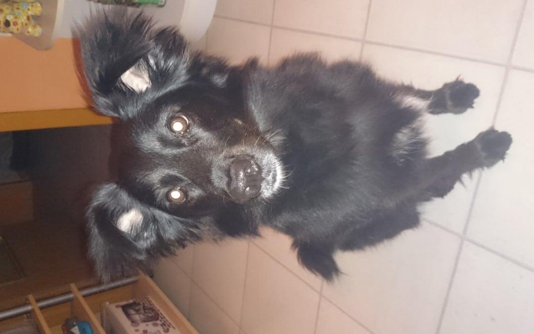 Hunde Foto: Kerstin und Lola – Einfach süss