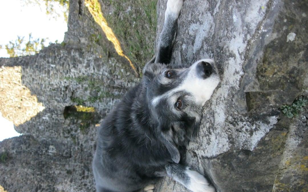 Hunde Foto: Tanja und Fly – ….man bin ich platt