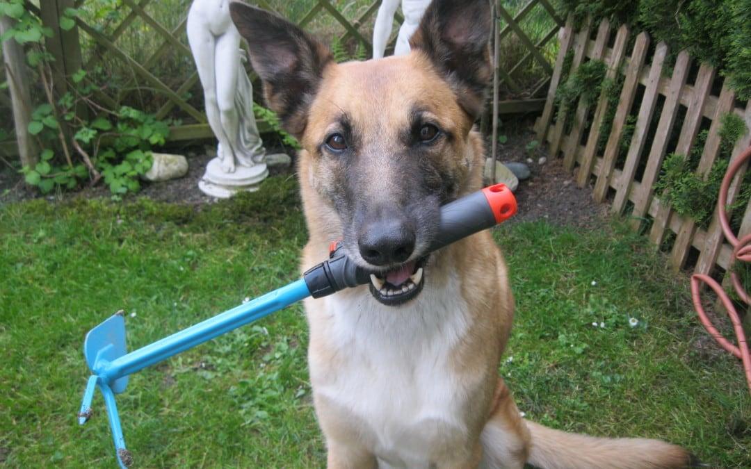 Hunde Foto: Tanja und Flash – Bin mit Gartenarbeit fertig …..Schnee kann kommen !!!