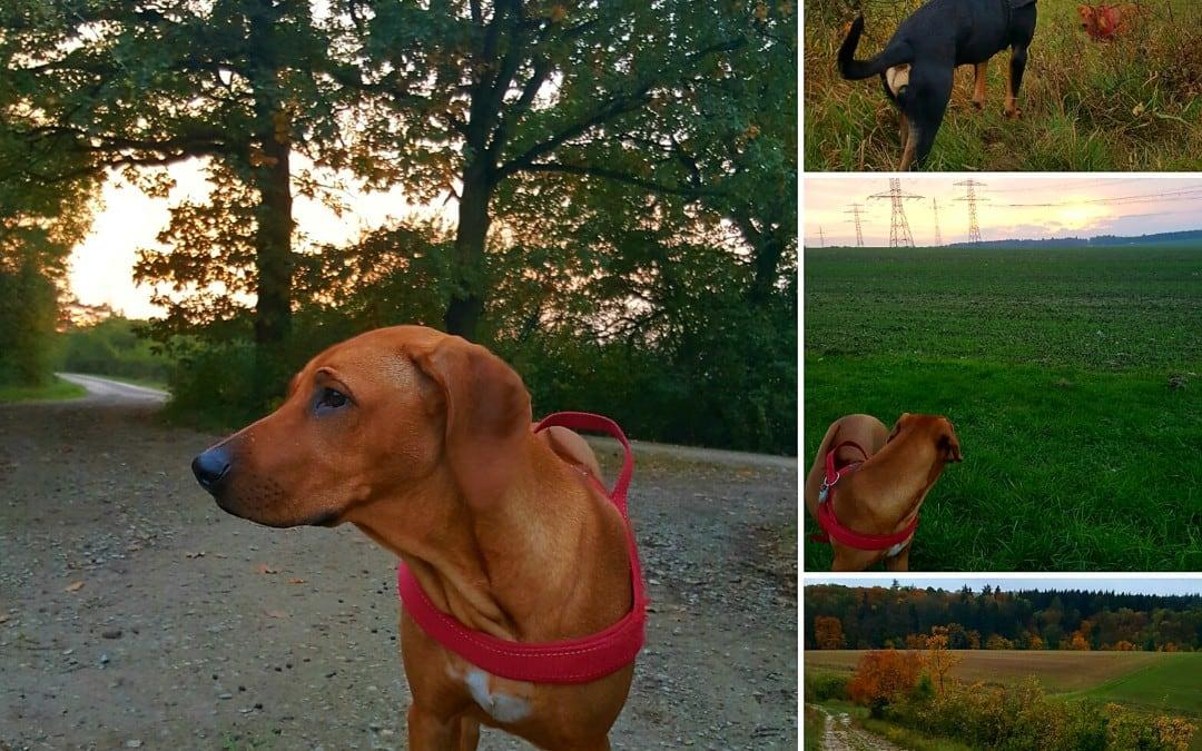 Hunde Foto: Jasmin und Elli und Apollo – Wir gehören zusammen!!! ???
