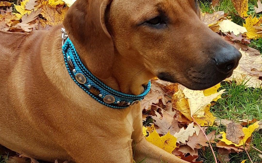 Hunde Foto: Celine und Adebayo – Herbsttime