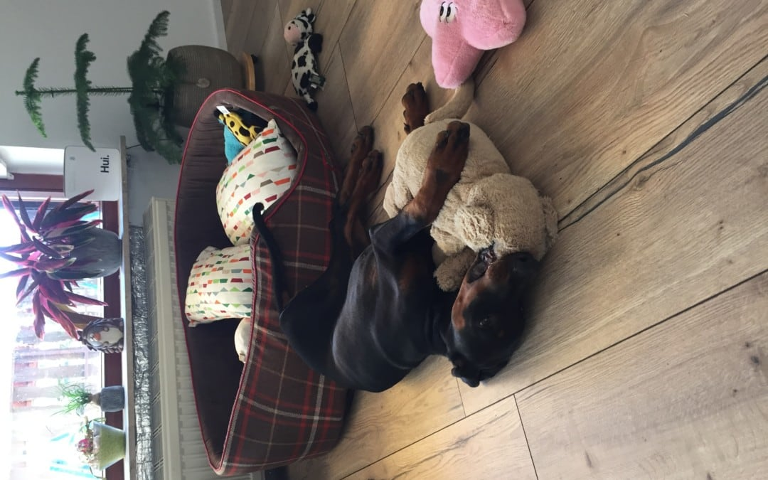 Hunde Foto: Nina und Abby – Meine Kuscheltiere und Ich