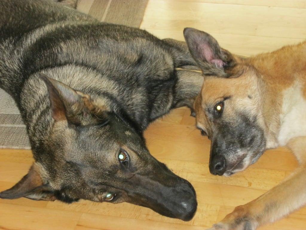 Hunde Foto Tanja Und Flash Shakira Schonen Sonntag Euch Allen