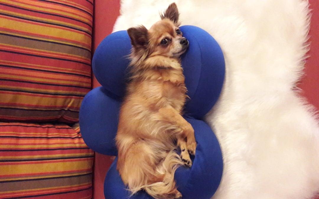 Hunde Foto: Trudi und Charly – Mis büebli am relaxen….