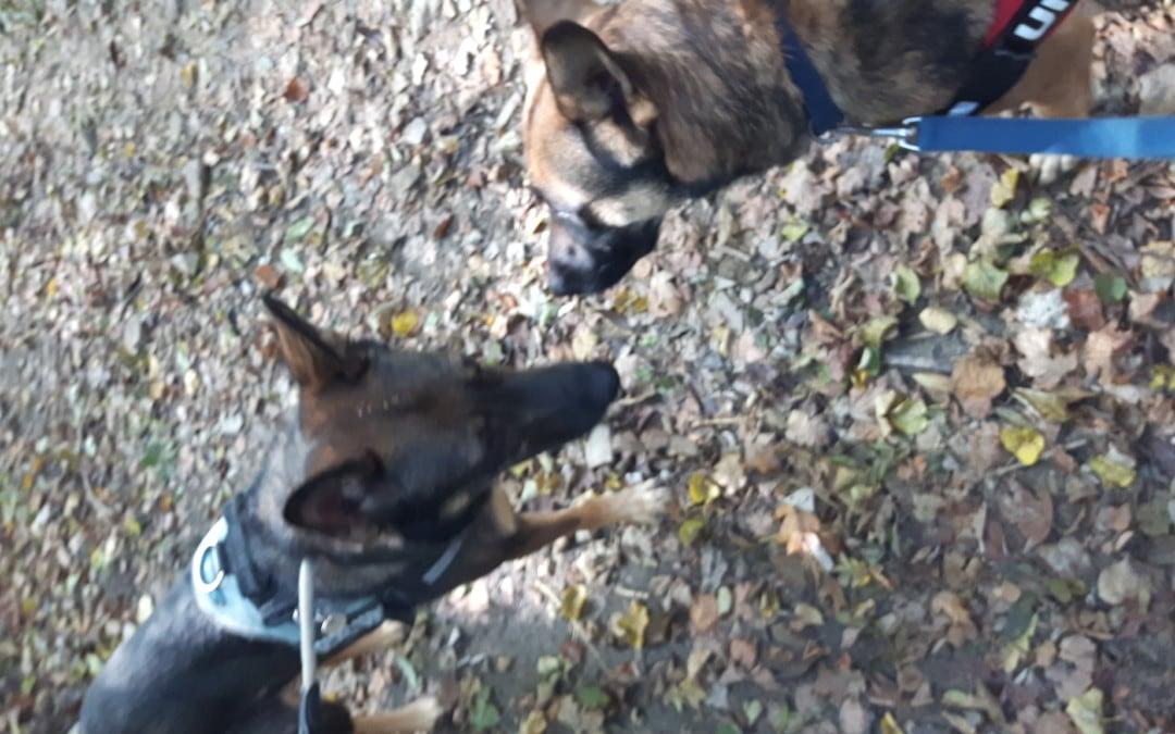 Hunde Foto: Claudia und Spikey und Nora – Erste Begegnung ??