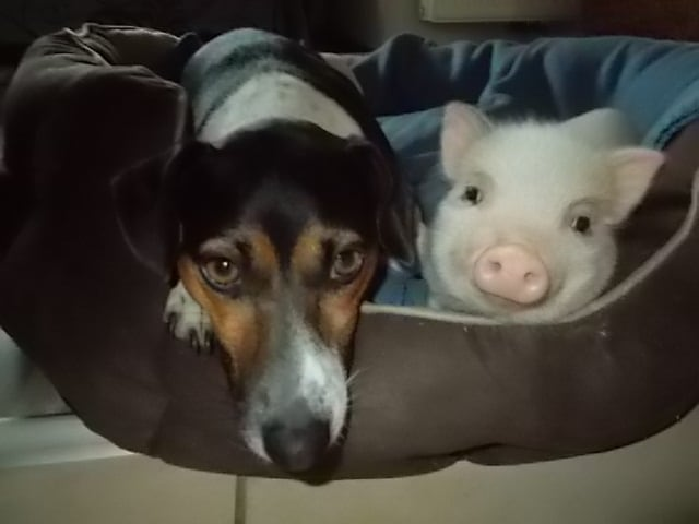 Hunde Foto: Sonja und Jackl und Susi – Meine Engel