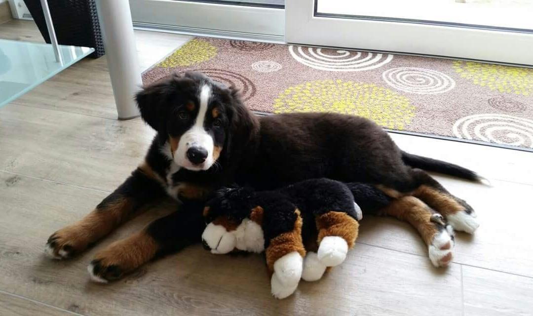 Hunde Foto: Kerstin und Alessia – Erster Tag Zuhause
