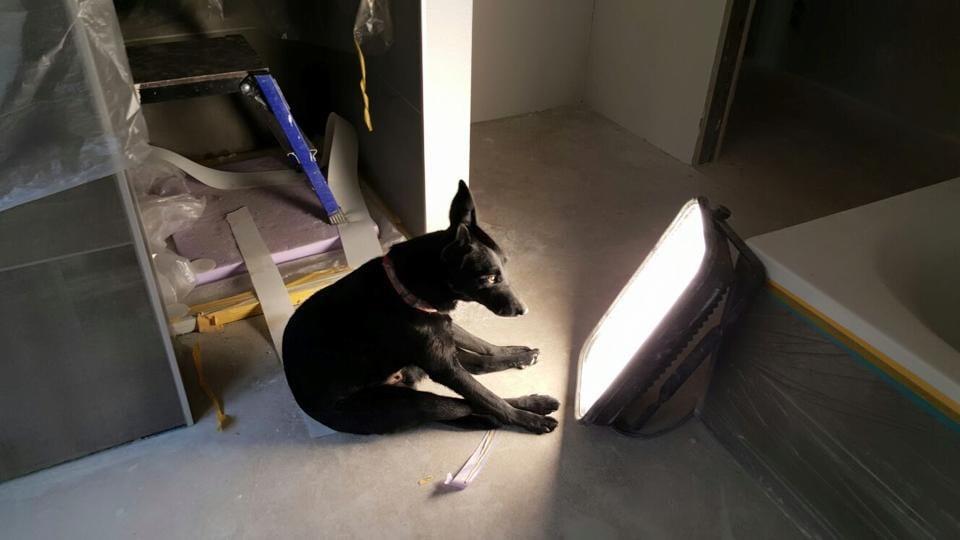 Hunde Foto: Enrico und Lilly – Lichttherapie