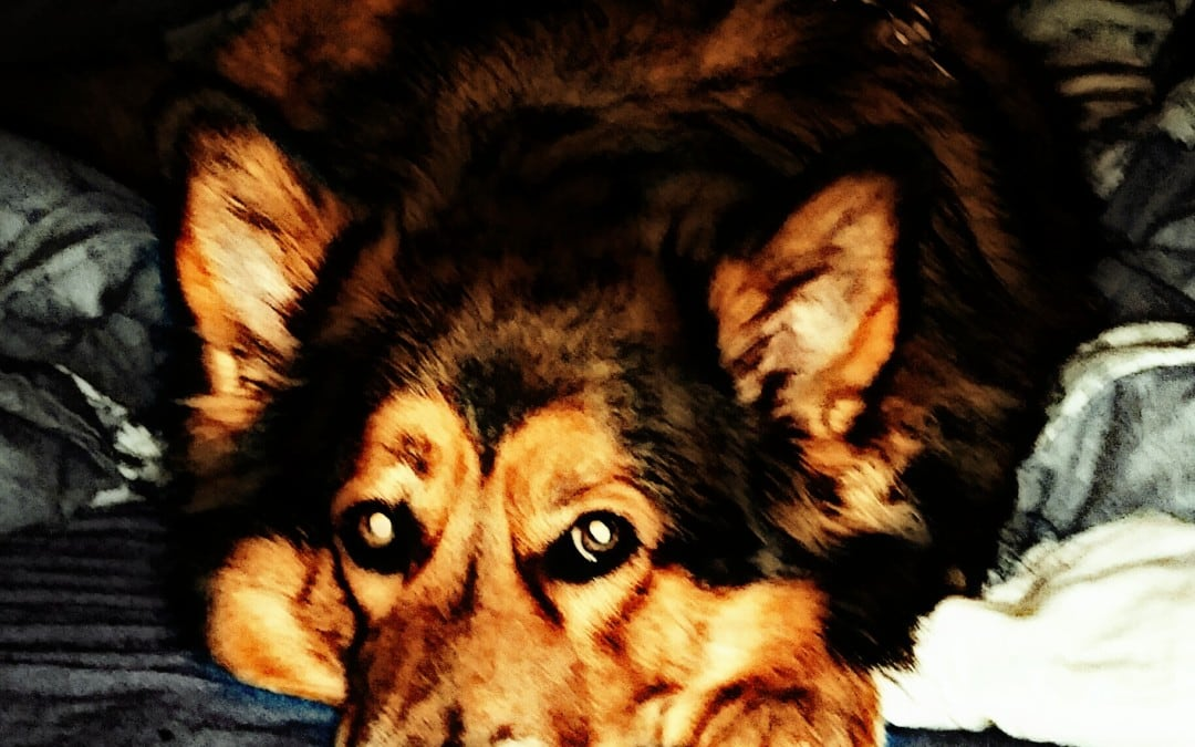 Hunde Foto: Micha und Mogli – Schmusebacke