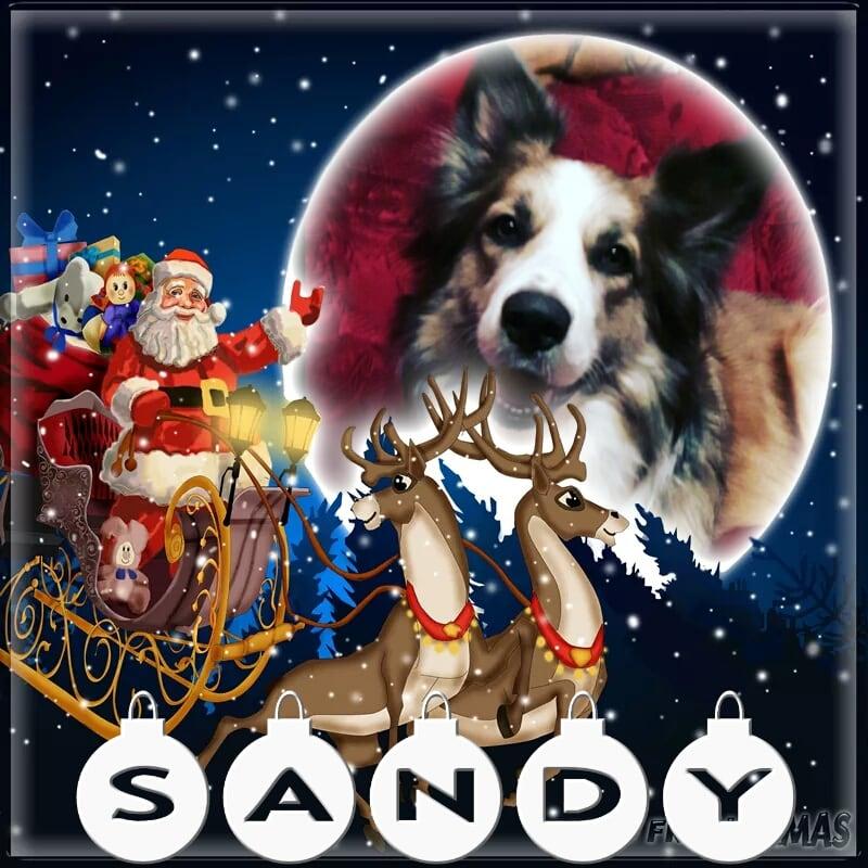 Hunde Foto: Martina und Sandy - Sandy unsere Nicolausi Mausi ?