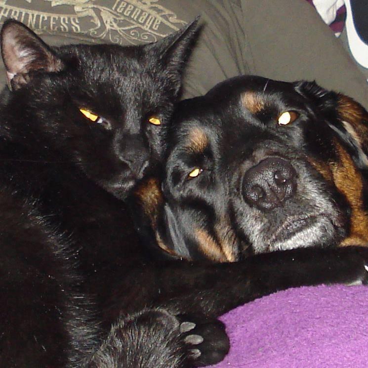 Hunde Foto: marina und gina & puma - zwei beste freunde gesucht und gefunden <3