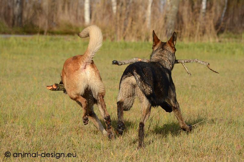Hunde Foto: Tanja und Flash & Shakira - In ein paar Stunden ist es so weit .....TSCHÜß 2016