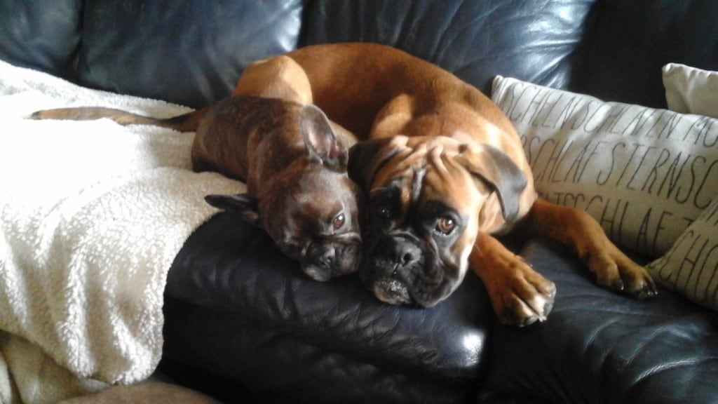 Hunde Foto: Birgit und Paddington und Pepe - Kuschelhunde