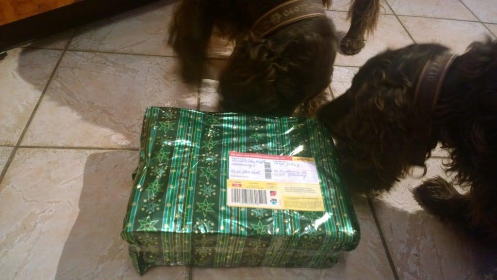 Hunde Foto: Helga und Frodo & Ishtar - Weihnachten mit Field Spaniel