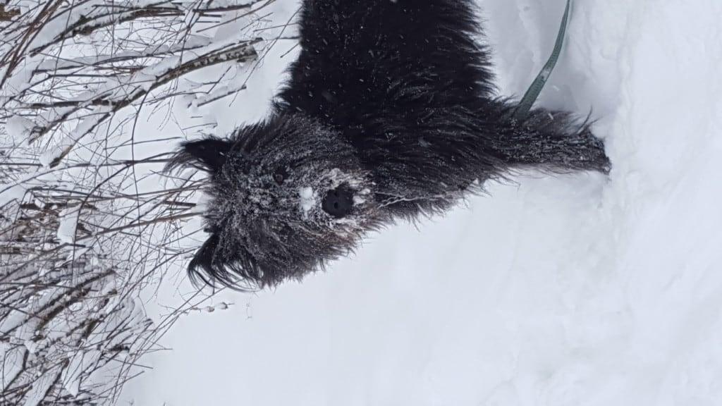 Hunde Foto: sandy und aiko - Schnee is verdammt kalt an der Nase...
