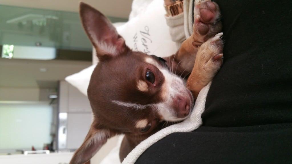 Hunde Foto: Michelle und Zeus - Ich schlafe mehr wie ein Faultier!