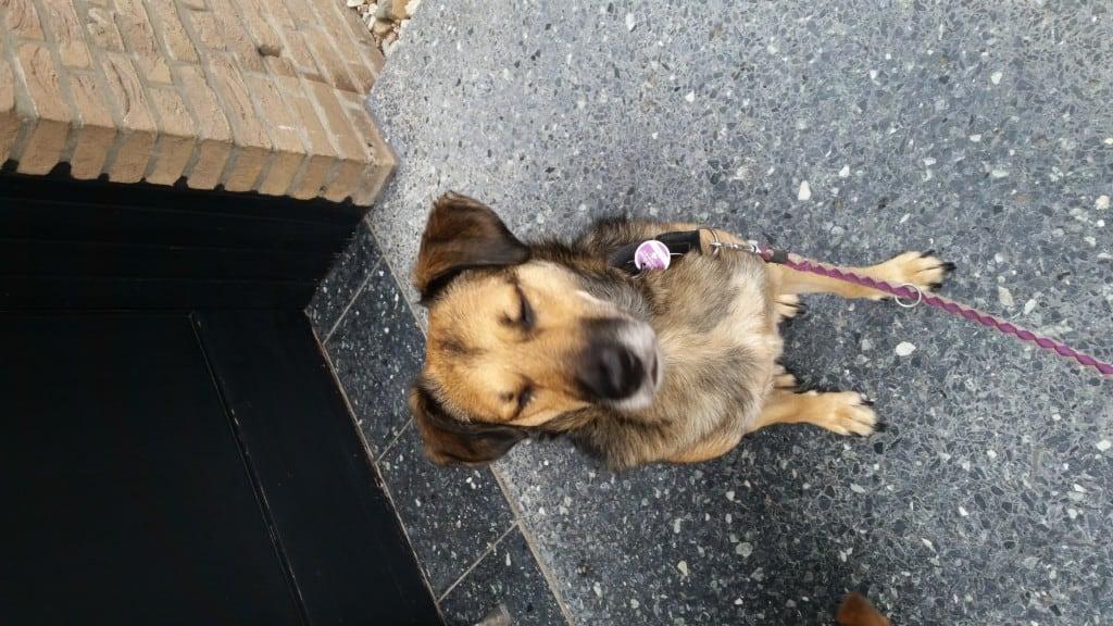 Hunde Foto: Monika und Ben - Wo bleibt mein Leckerli,? Ich war doch sooooooo lieb ❤