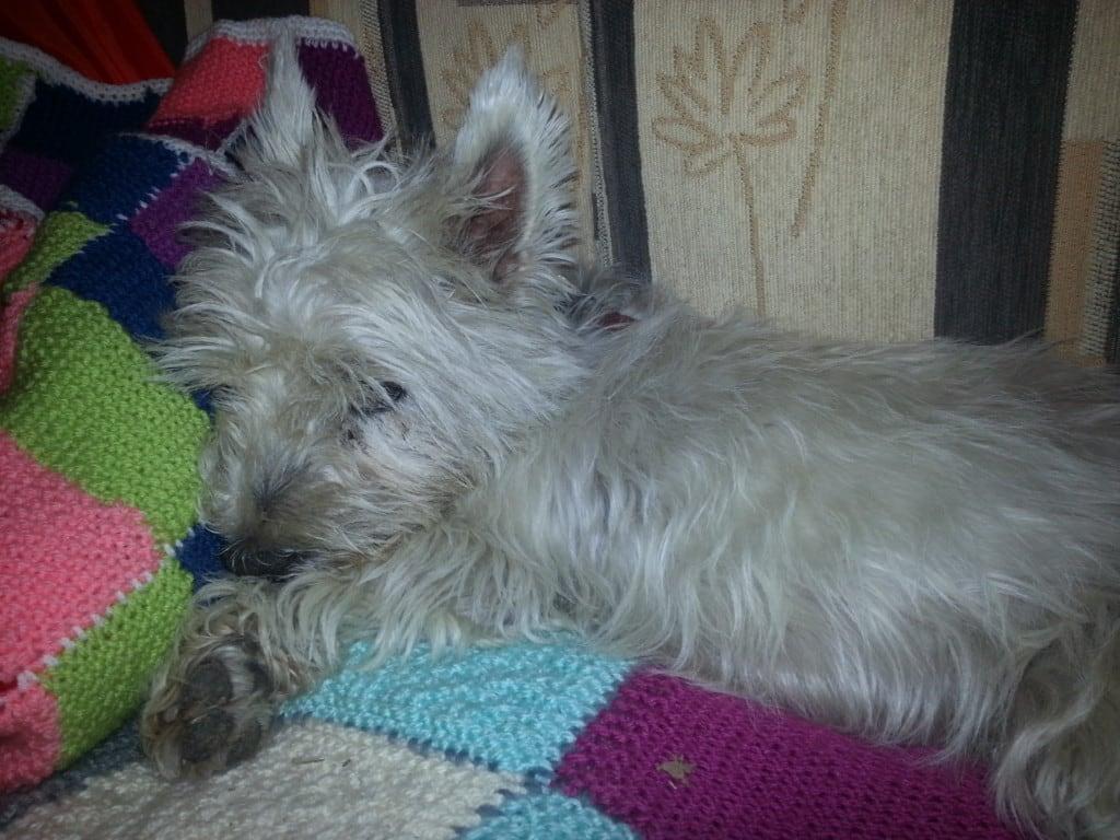 Hunde Foto: sylvia und hexe - meine süsse Hexe