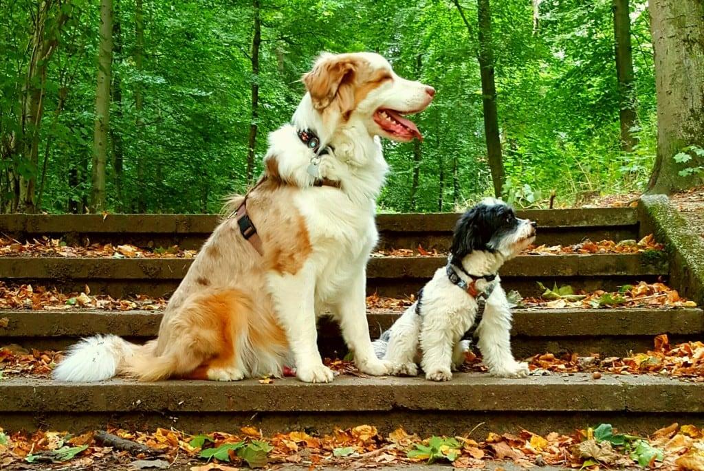 Hunde Foto: Silvia und Yuma und Buddy - Wir schauen ins neue Jahr