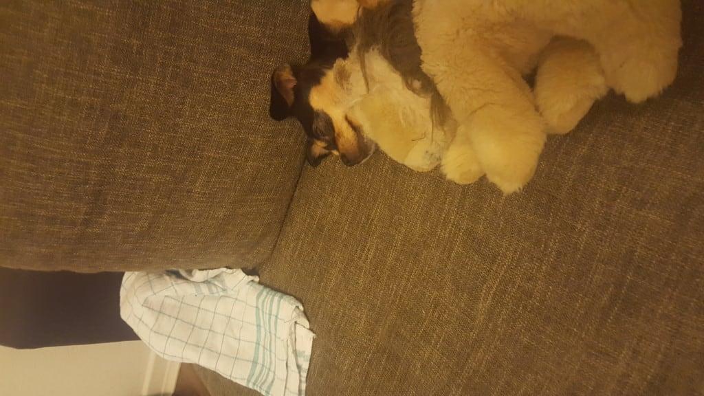 Hunde Foto: Nurdan und Lilli - Mein baby