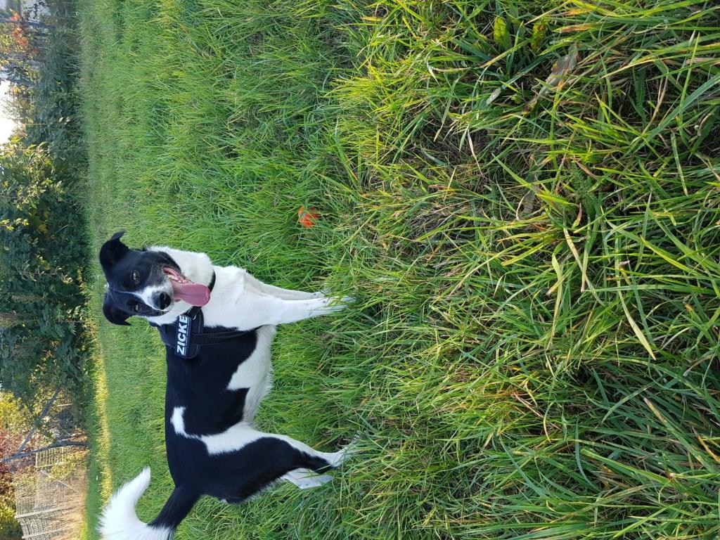Hunde Foto: Nadine und Mini - Immer muss ich rennen...