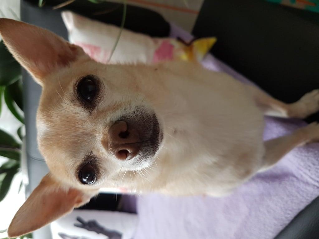Hunde Foto: Melanie und Rocky - Schau mir in die Augen Kleines!