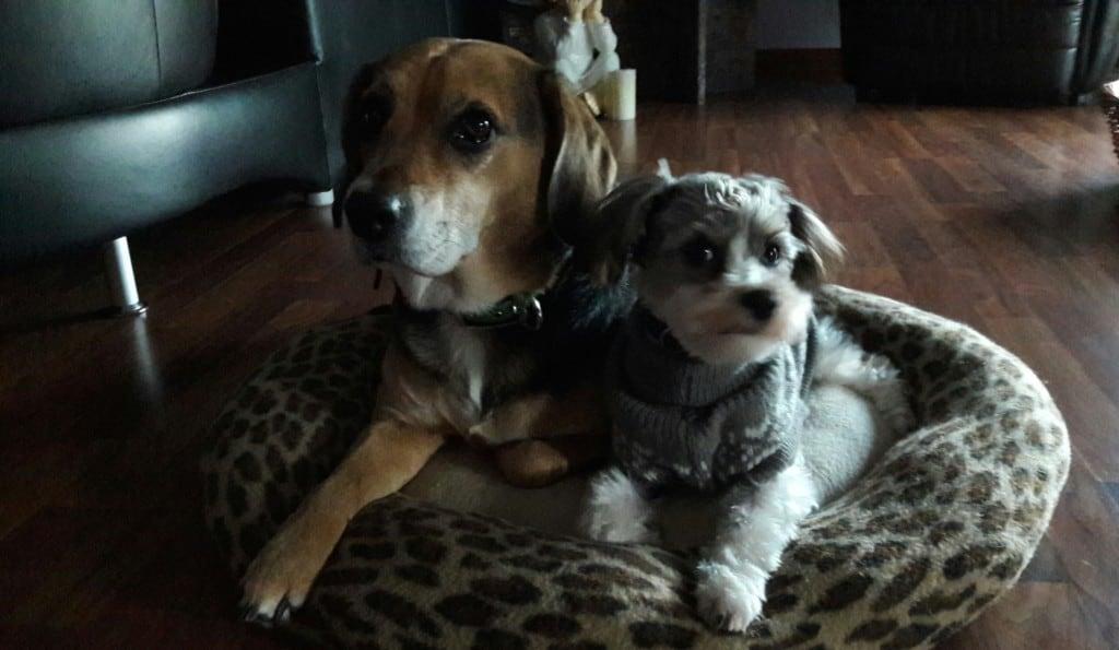 Hunde Foto: Andrea und NELE & KIRA - Siamesische Zwillinge