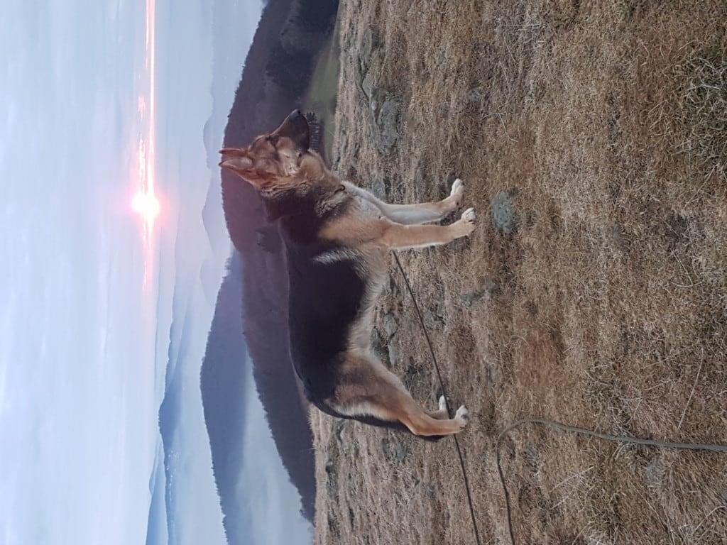 Hunde Foto: Denise und Pol - Pol aus der schönen Rhön
