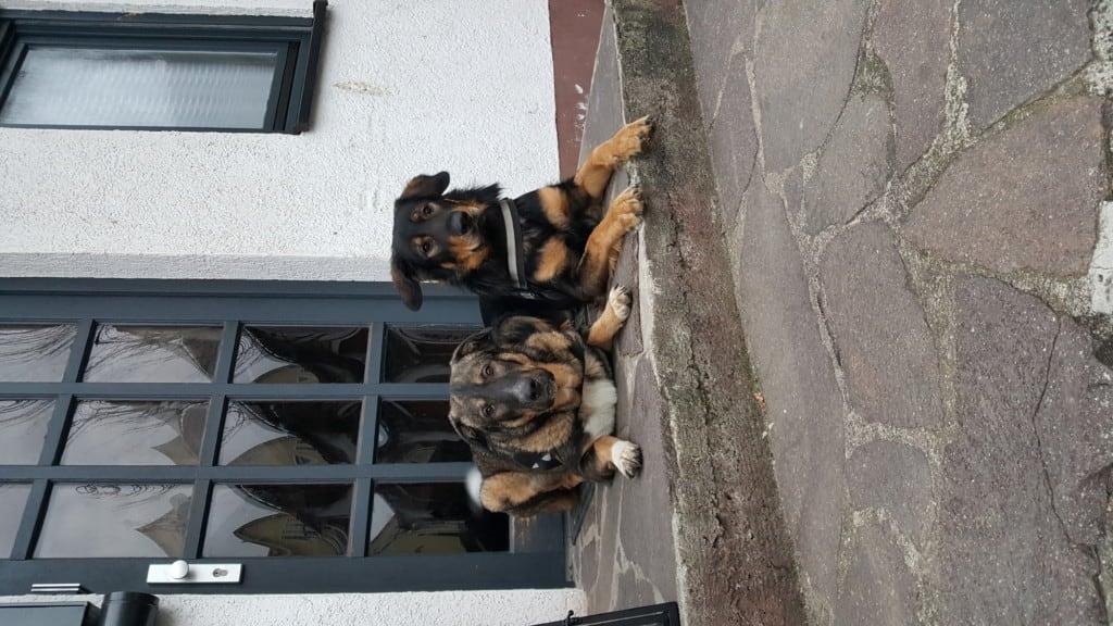 Hunde Foto: Grabner und Atilla und Tyson - Keiner kommt rein